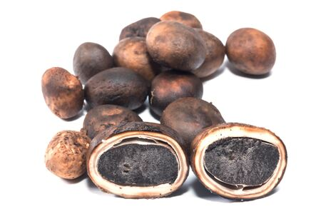 barometer: Mushroom  Barometer Earthstars Astraeus hygrometricus isolate on white Stock Photo