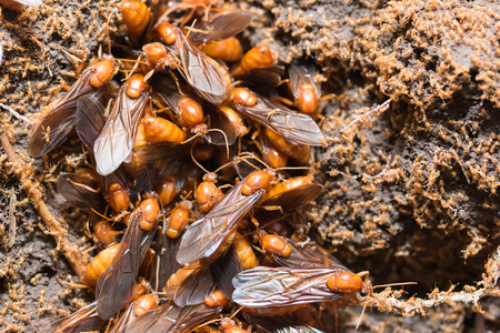 subterranean: The subterranean ants are out of the hole
