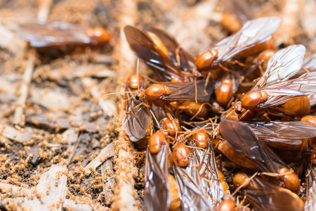 larval: The subterranean ants are out of the hole