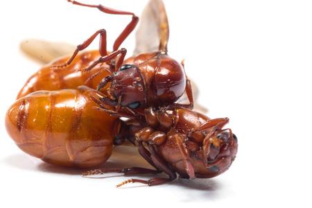 subterranean: The subterranean ants isolate on white Stock Photo