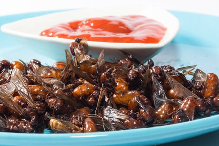 subterranean: ried ant  fried  subterranean ants with chili sauce isolate on white Stock Photo