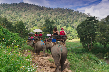 Group tourists to ride on an elephant in forest Chiang mai, Thailand Stock Photo