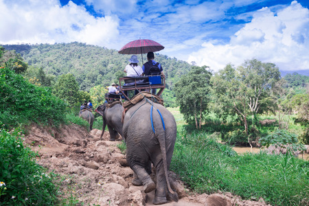 Elephant trekking through jungle in northern Thailand