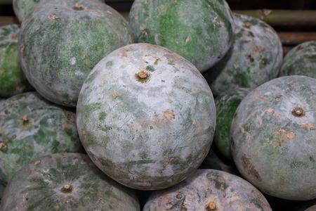 ash gourd: gourd