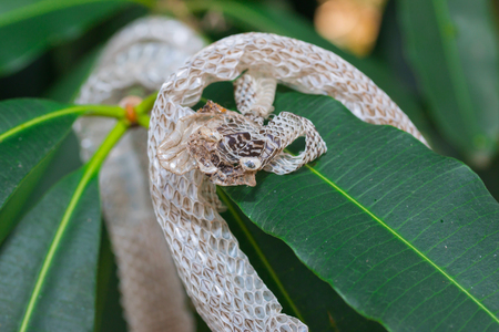 molting: Snake molt on the tree Stock Photo