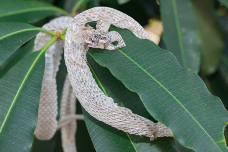 Snake molt on the tree Stock Photo