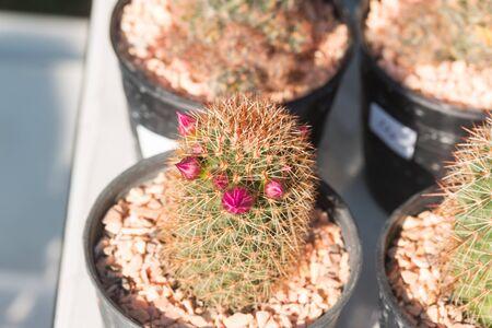 Beautiful Cactus tree in garden