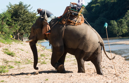 walking paths: Elephant riding across the river for tourists in nort of Thailand Stock Photo