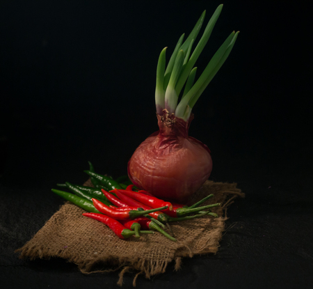 Fresh chili with onion is germinating isolate on Black background