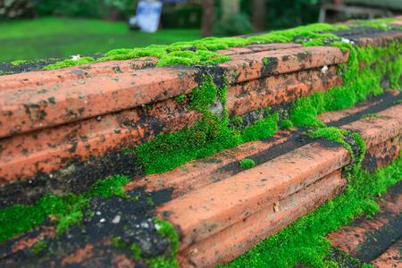 green moss, green lichen on the Brick