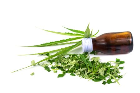 Green marijuana leaves and Cannabis oil is herbs for cancer treatment isolated over white background