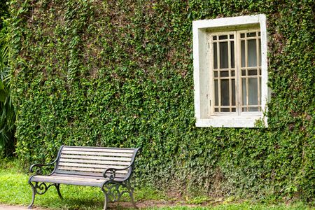 Ancient house window and  sofa or chair Covered with vines or climber