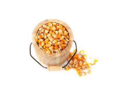 Dried corn seed in Bucket isolate on white background Stock Photo