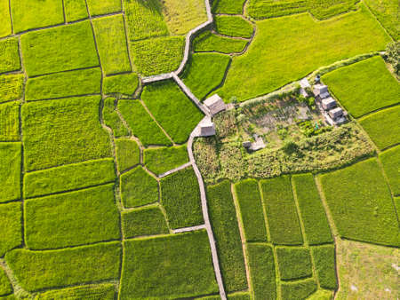 Beautiful Green rice fields From drones Фото со стока