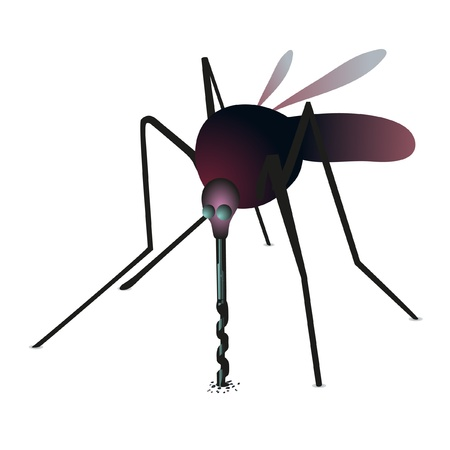 proboscis: Mosquito drilling the surface