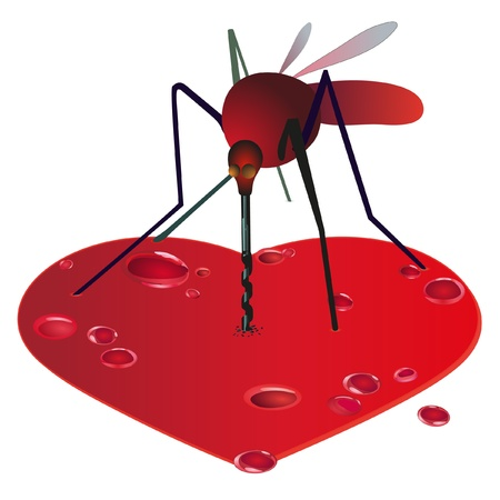 gnat: Mosquito on the red bleeding heart Illustration