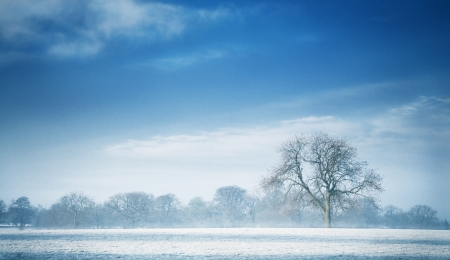 wintry landscape: Landscape view of a blue cold winter morning with a tree as a focal point  This landscape is shot at Cheshire near Macclesfield Stock Photo