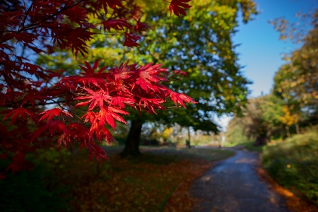 alexandra: Vibrant colors of autumn in Alexandra Park Oldham, Manchester, England