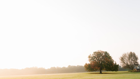 solitude: Lone tree on low horizon in a morning sunglight against white sky  Stock Photo