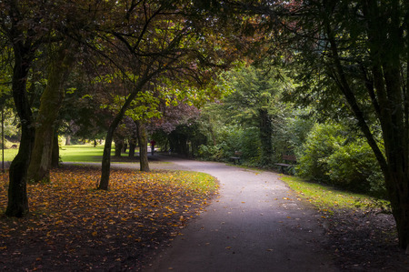 Pathway coverd by trees in a park near buxton England photo