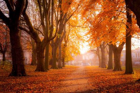 descriptive colours: Beautiful trees in autum colors at Whitworth Park in south Manchester, United Kingdom.