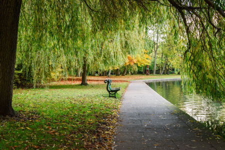 walkway: A lone bench in a park framed by tree branches. Stock Photo