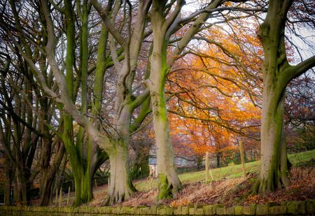 districts: row of trees in the autumn season at peak district England