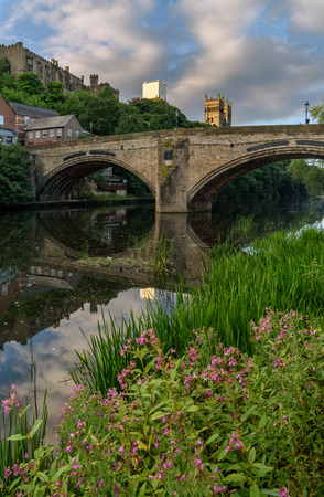 Wild flower on the bank of River Weir flowing through the Durham City, England. Stock Photo