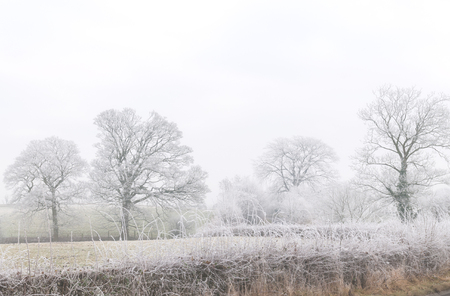 frost covered: Mist above a frost covered hedgerow and trees alongside a meadow in Cheshire  England, UK. Stock Photo