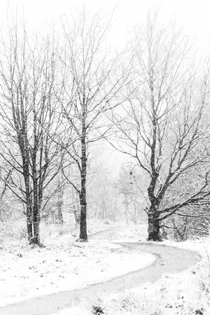 UK forest on cold and snowy winter day.