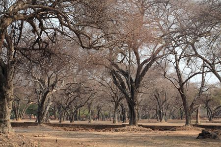 dry tree in ancient city photo