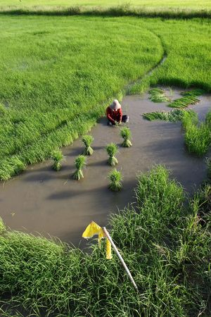 farmer with working on rice field photo