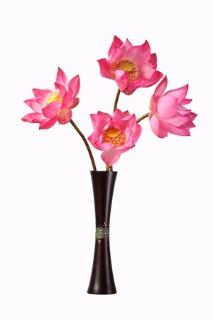 lotus flowers in vase isolated in white background photo