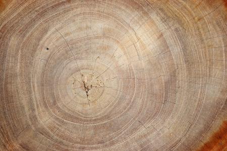 Textura de madera de tronco de árbol cortado, primer plano Foto de archivo - 20982053