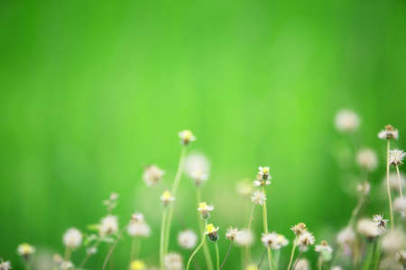 grass flower with green background,shallow DOF  photo