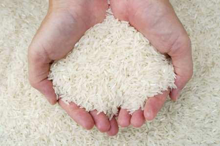 thai jasmine rice on hand  photo