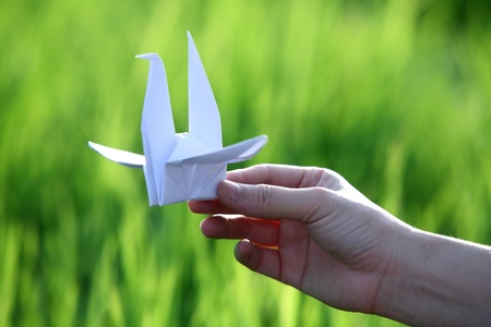hand holding paper bird with green paddy field background  photo