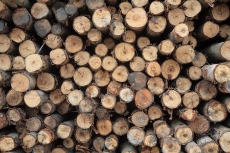 Fond d'eucalyptus bois de chauffage sec journaux empilés les uns sur les autres dans une pile Banque d'images - 21005539