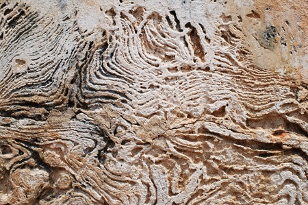 weathered concrete wall Stock Photo - 21056432