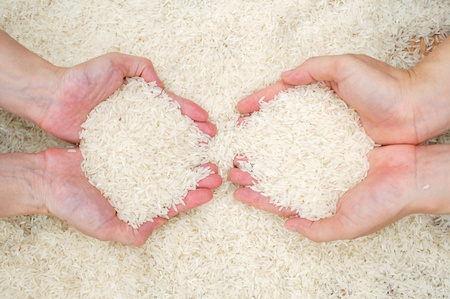 hand holding rice grain  photo