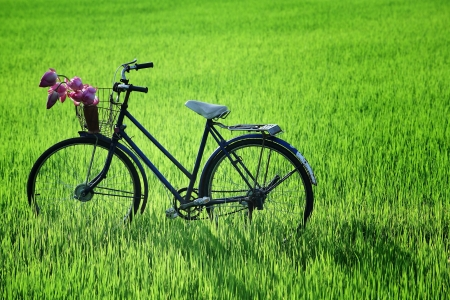 old bicycle in paddy field  photo