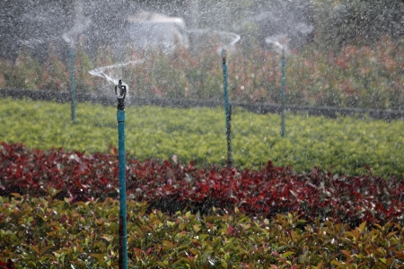 Water sprinkler system working in a nursery plantation  photo