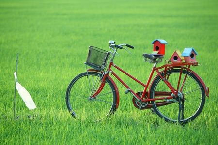 colorful bird house and bicycle in paddy field  photo