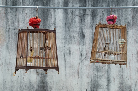 couple birdcage of red-whiskered bulbul with grunge wall background   photo