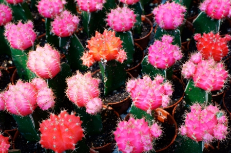 colorful cactus  photo