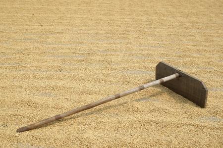 bamboo harrow on rice grain photo