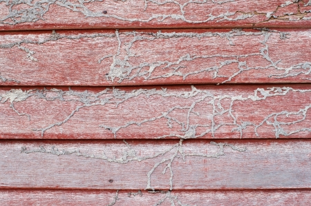 termite track on wall  Фото со стока