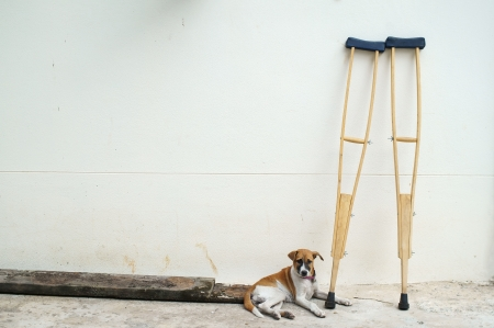 dog and crutches at white wall