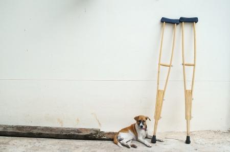 hond en krukken op witte muur Stockfoto