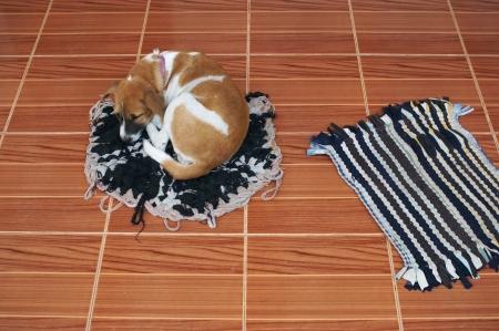 dog sleeping on doormat. photo